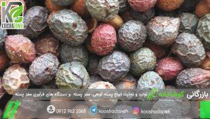 بازار خرید پسته کوهی شیراز
