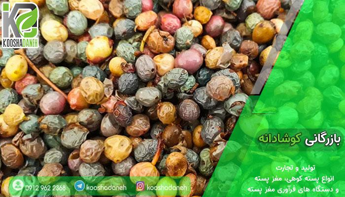 تولید کننده انواع پسته کوهی شیراز