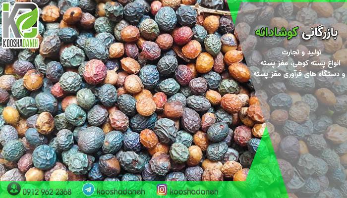 فروش استثنایی پسته کوهی شیراز